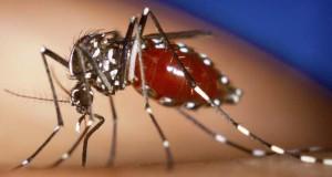 Un mosco transmisor del virus Zika que produce sintomas parecidos a Dengue