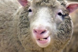 Dolly-la-oveja-clonada-470x260