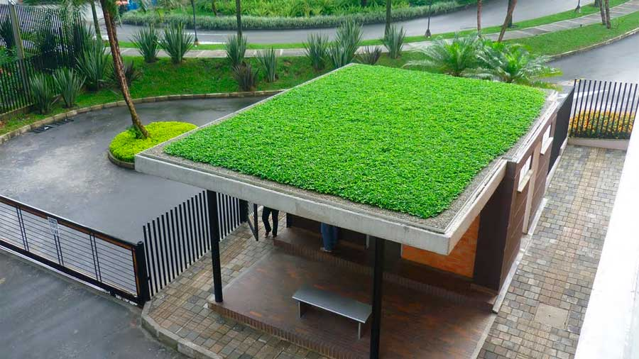 Investigadores mexicanos crean techos verdes econ micos y for Techos y paredes verdes