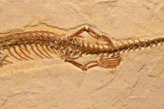Las serpientes tuvieron patas hace 100 millones de años