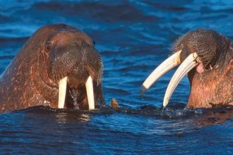 Países entienden que perdemos miles de especies animales por caza, pesca y abandono