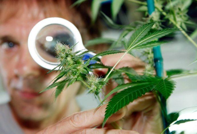 """Pues Méxiico ya es como Estados Unidos, podrá usar la marihuana con """"fines"""" medicinales"""