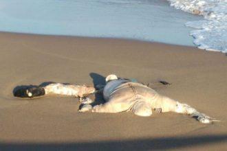 El mar ya arrojó uno de los cuerpos, otro más está por confirmarse/ J.A Valencia