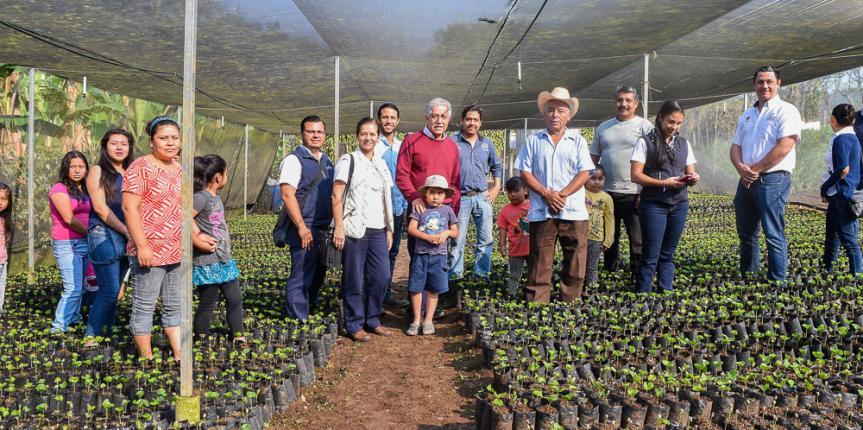 Tecnifica c rdoba 16 viveros proveer n plantas de caf a for Vivero de cafe pdf