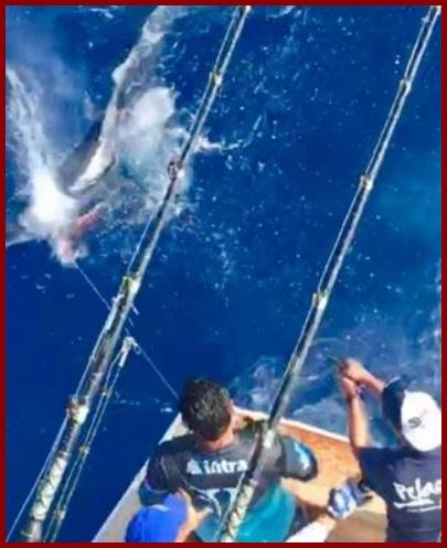 'Riquillos' de Veracruz pescan tiburón y le disparan