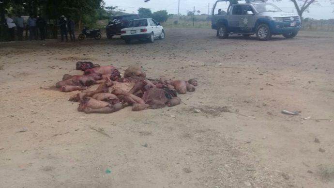 Hallan cinco decapitados y descuartizados en la Cuenca del Papaloapan